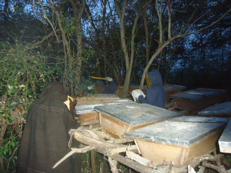 APIARY PROJECT-1